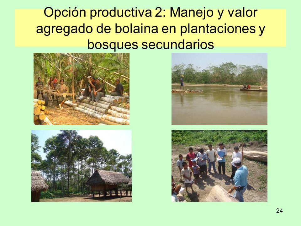 Opción productiva 2: Manejo y valor agregado de bolaina en plantaciones y bosques secundarios