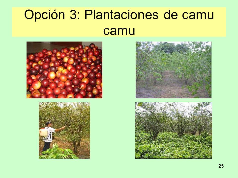 Opción 3: Plantaciones de camu camu