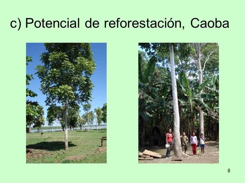 c) Potencial de reforestación, Caoba