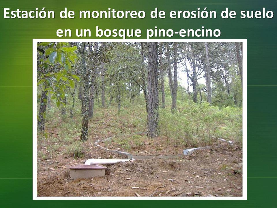 Estación de monitoreo de erosión de suelo en un bosque pino-encino