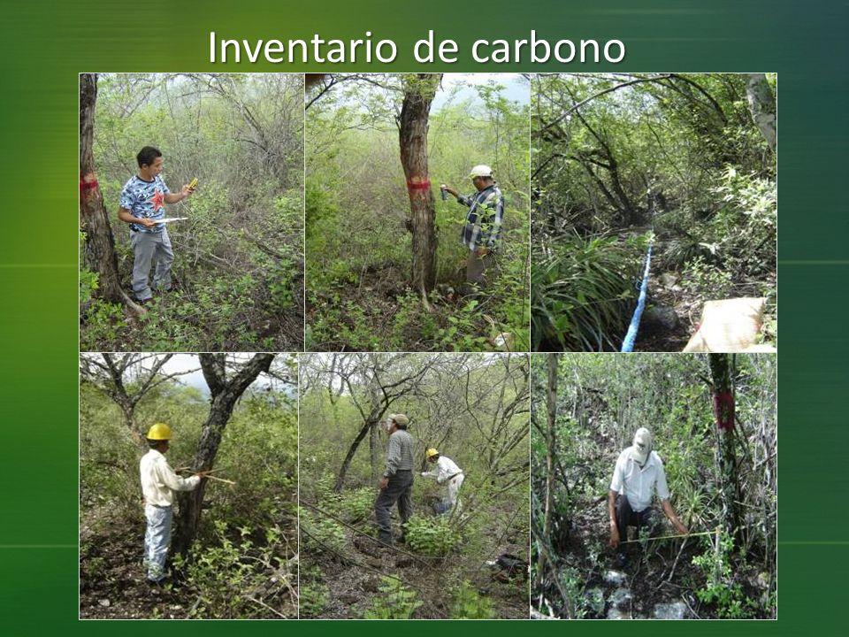 Inventario de carbono