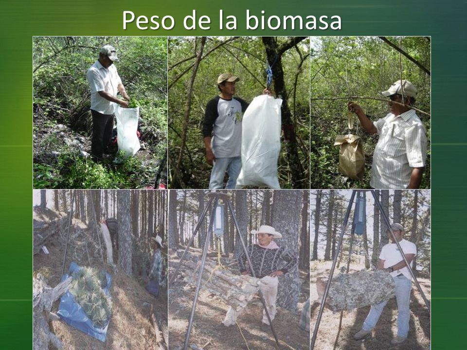 Peso de la biomasa