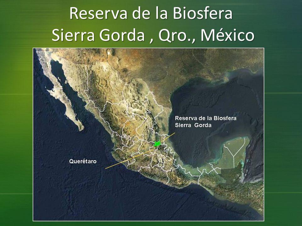 Reserva de la Biosfera Sierra Gorda , Qro., México