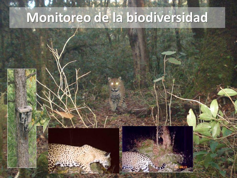Monitoreo de la biodiversidad