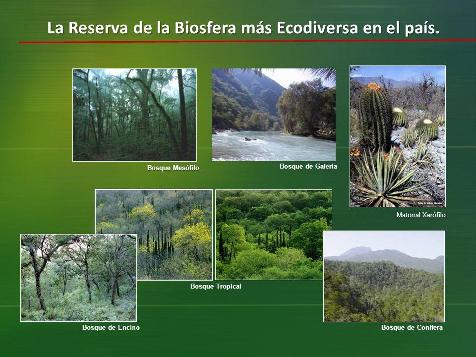 La Reserva de la Biosfera más Ecodiversa en el país.