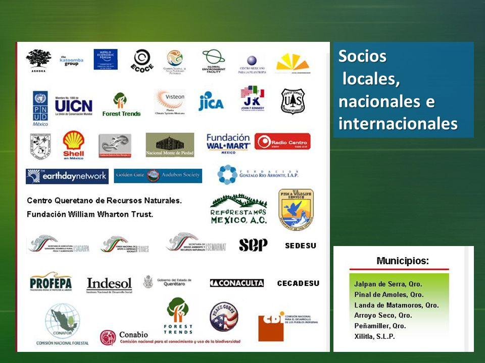 Socios locales, nacionales e internacionales