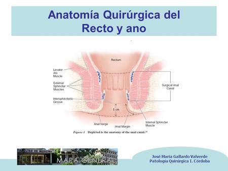 PATOLOGIA ANAL ANATOMIA RECTO ANAL - ppt descargar