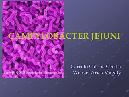 CAMPYLOBACTER JEJUNI Carrillo Caloña Cecilia Wenzel Arias Magaly