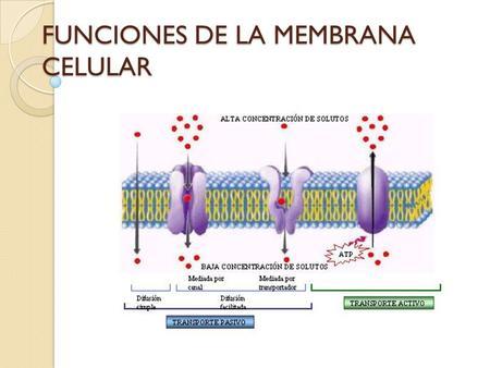 La Membrana Celular Estructura Y Función Ppt Video Online
