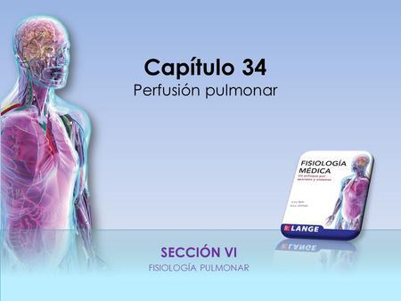 Ventilación y Perfusión de los Pulmones - ppt video online descargar