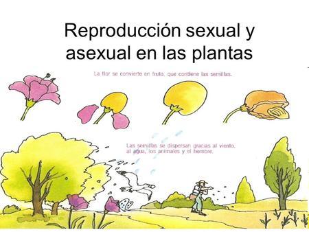 Ejemplos de plantas reproducidas asexualmente