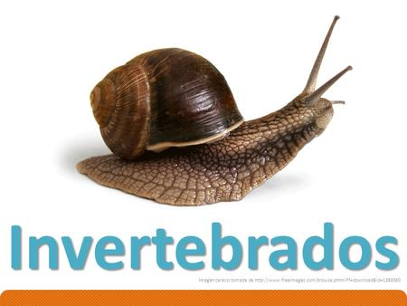 Invertebrados Imagen caracol tomada de http://www.freeimages.com/browse.phtml?f=download&id=1389360.