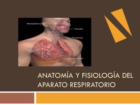 FISIOLOGIA DE LA RESPIRACIÓN (Dinámica pulmonar - ppt descargar