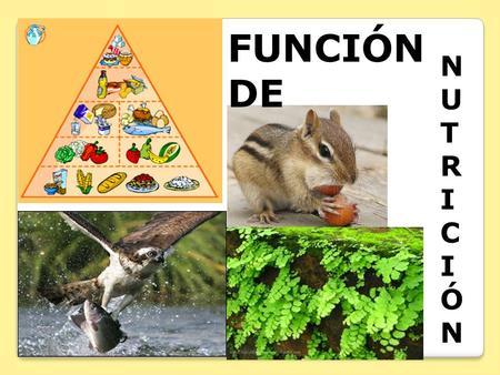nutricion de los seres vivos biologia