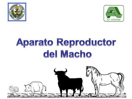 ANIMALES DE PRODUCCIÓN - ppt video online descargar