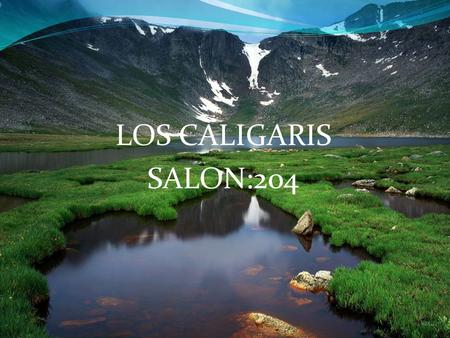 LOS CALIGARIS SALON:204.