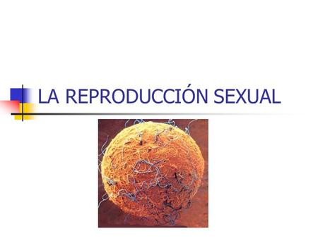 LA REPRODUCCIÓN SEXUAL