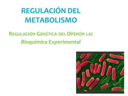 REGULACIÓN DEL METABOLISMO