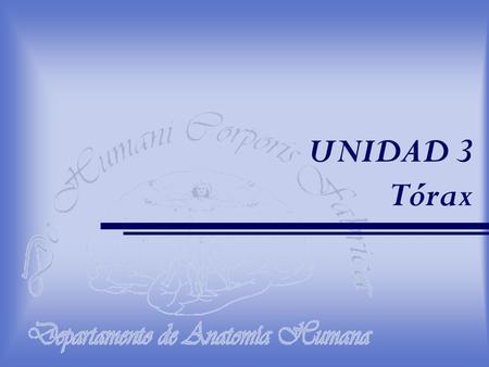 Corazón y Pericardio Prof. Sandra Bucarey A. Anatomía Humana Anat ...