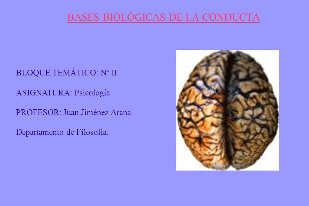 Bases Biológicas De La Conducta Ppt Descargar