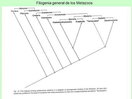 filogenia platyhelminthes papilloma virus genitale sintomi