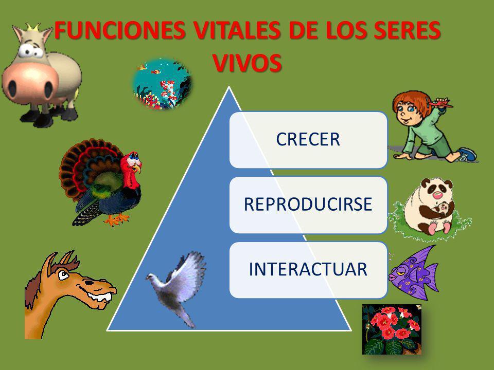 Funciones Vitales De Los Seres Vivos Ppt Video Online Descargar