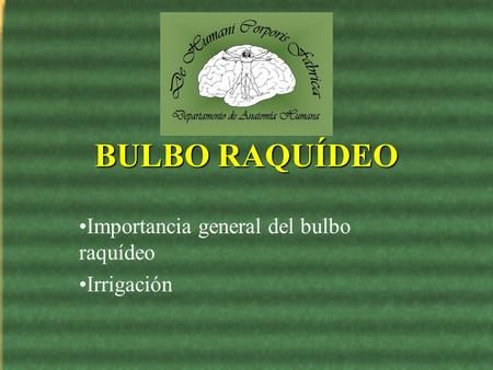 Importancia general del bulbo raquídeo Irrigación