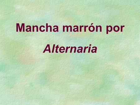 Mancha marrón por Alternaria.