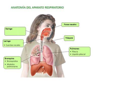 Enfermedades cardiovasculares y respiratorias - ppt descargar