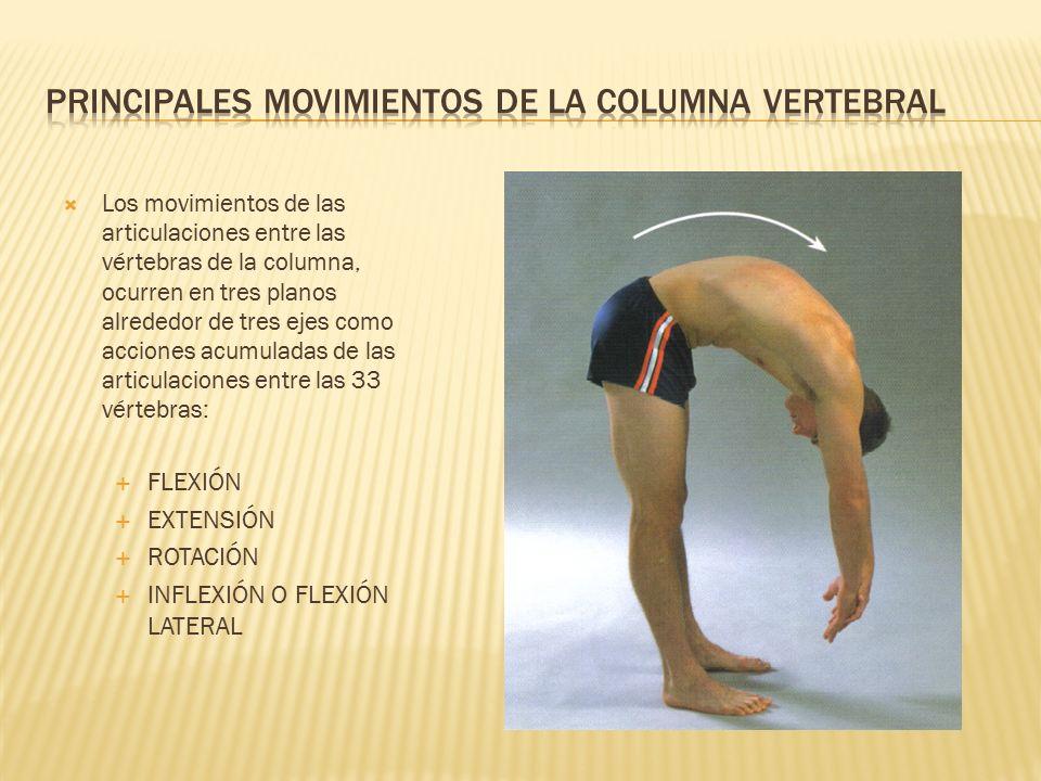 MOVIMIENTOS Y MÚSCULOS DE LA COLUMNA VERTEBRAL - ppt video online ...