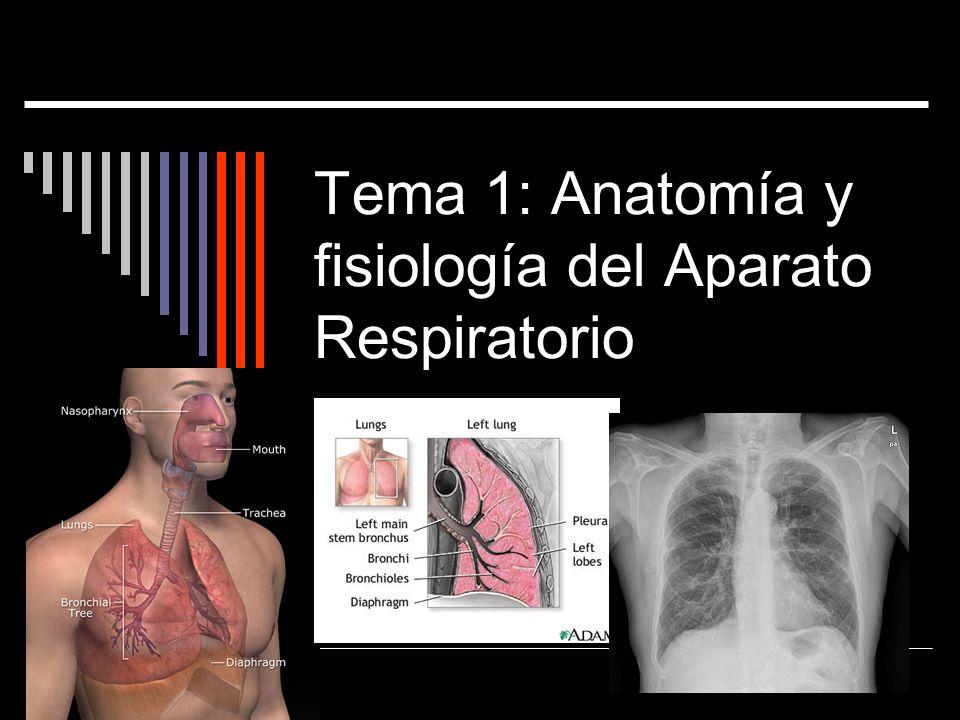 Tema 1: Anatomía y fisiología del Aparato Respiratorio - ppt descargar