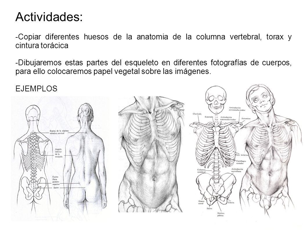 ANATOMIA. - ppt video online descargar