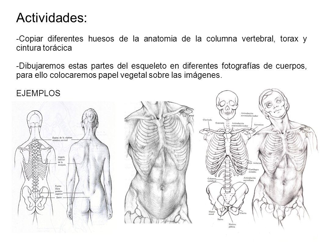 Excepcional Tórax Anatomía Ppt Inspiración - Fisiologia del Cuerpo ...