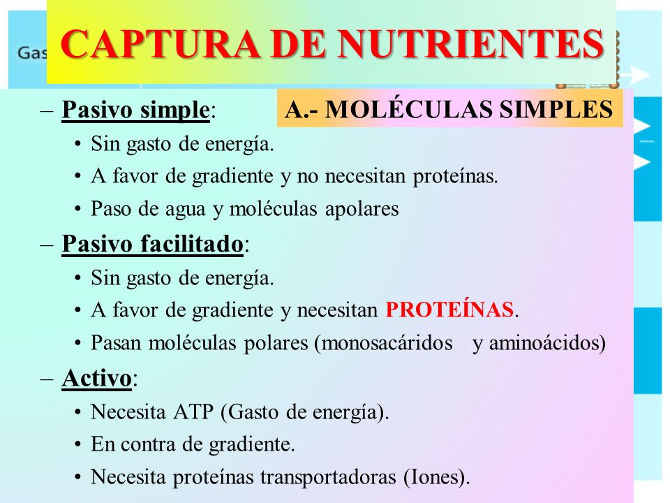 CAPTURA DE NUTRIENTES Pasivo simple: Pasivo facilitado: Activo:
