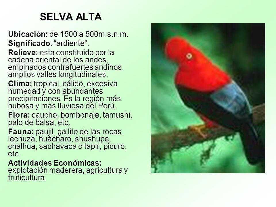 Plantas De Selva Alta: Cordillera De Los Andes