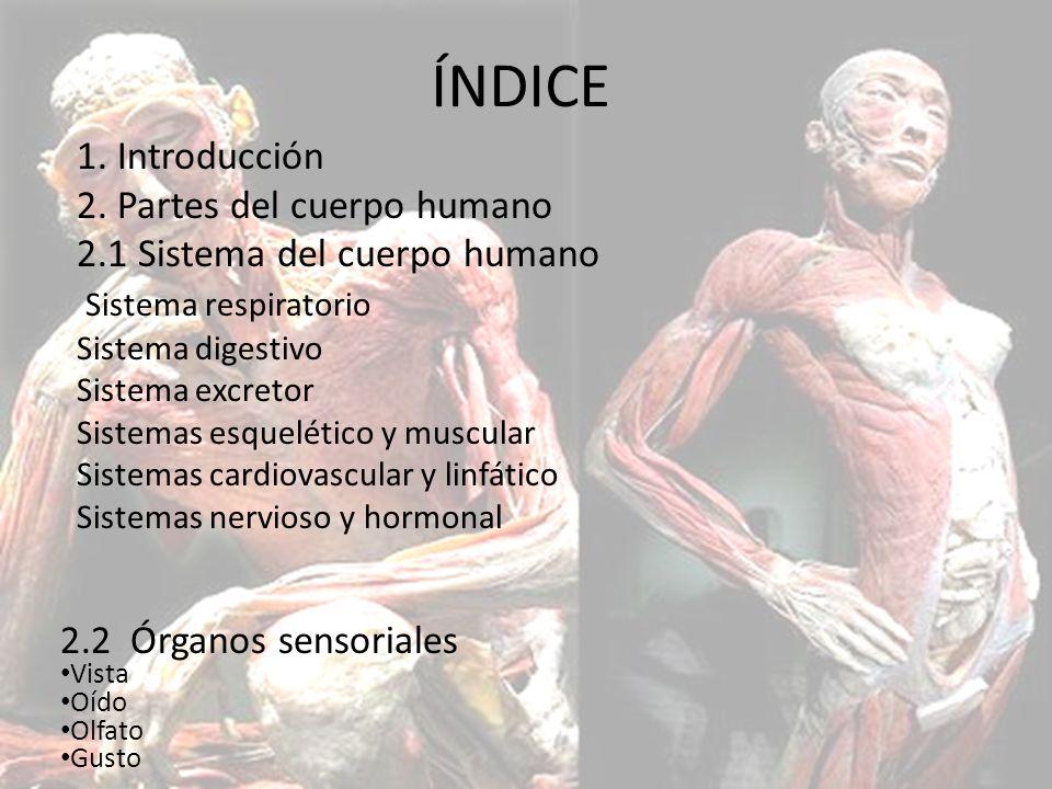 EL CUERPO HUMANO. - ppt descargar