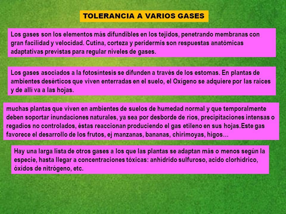 Dorable Respuestas Hoja De Tejido Bosquejo - hojas de trabajo ...