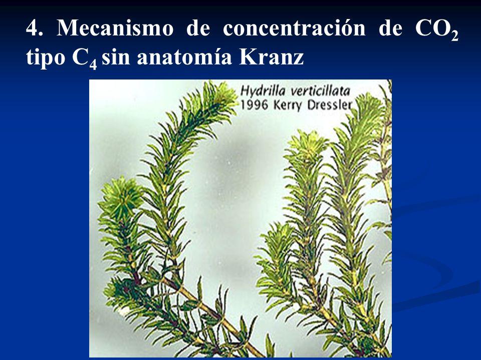 Fotorrespiración y mecanismos de concentración de CO2 - ppt video ...