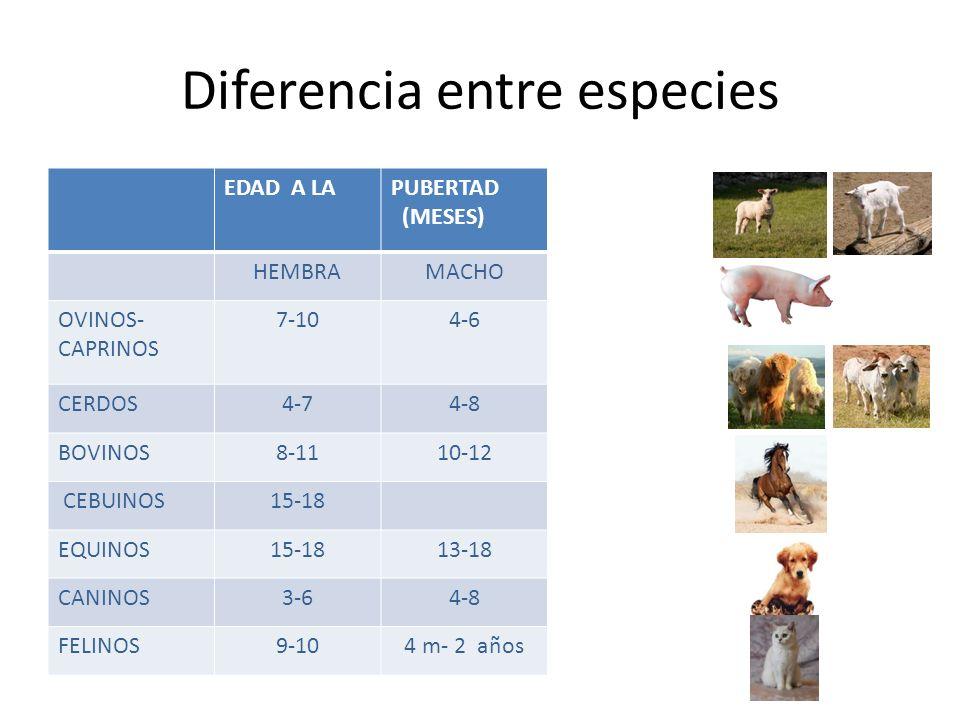 PUBERTAD EN LOS ANIMALES DOMÉSTICOS - ppt video online descargar