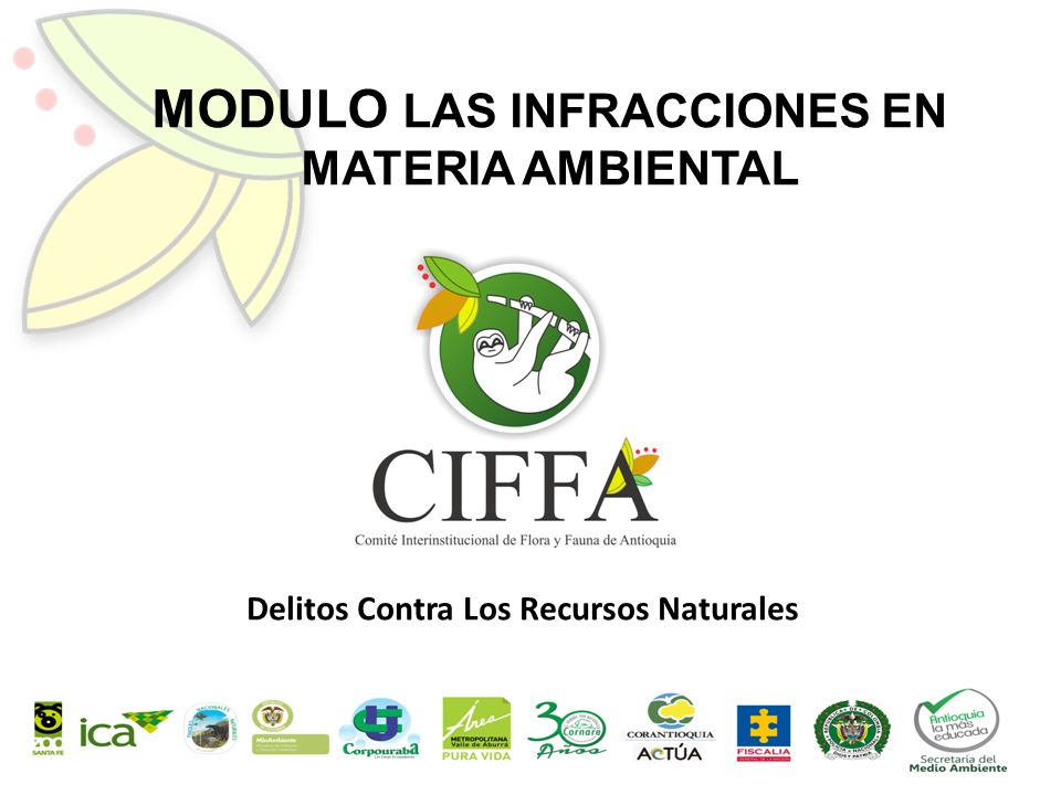 Modulo Las Infracciones En Materia Ambiental Ppt Descargar