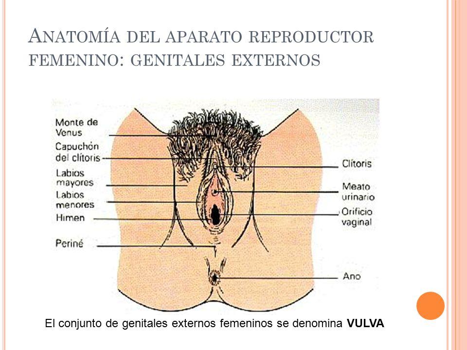 Excepcional Labios Anatomía Femenina Motivo - Imágenes de Anatomía ...
