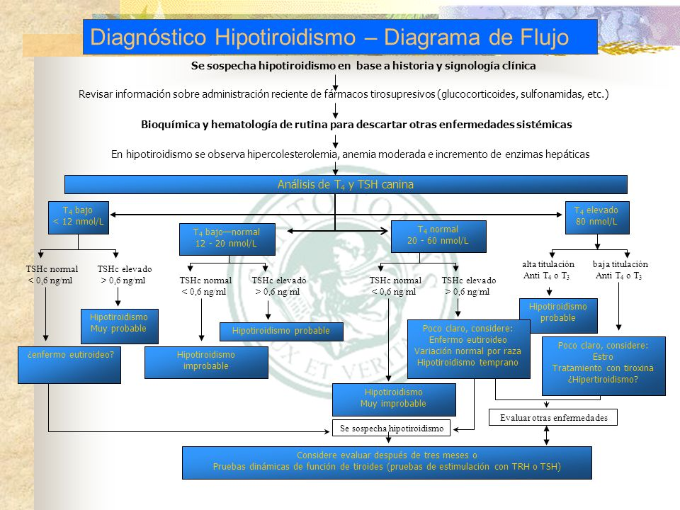 Hipotiroidismo canino - ppt video online descargar