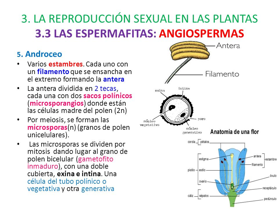 LA REPRODUCCIÓN Y LA RELACIÓN DE LAS PLANTAS - ppt descargar