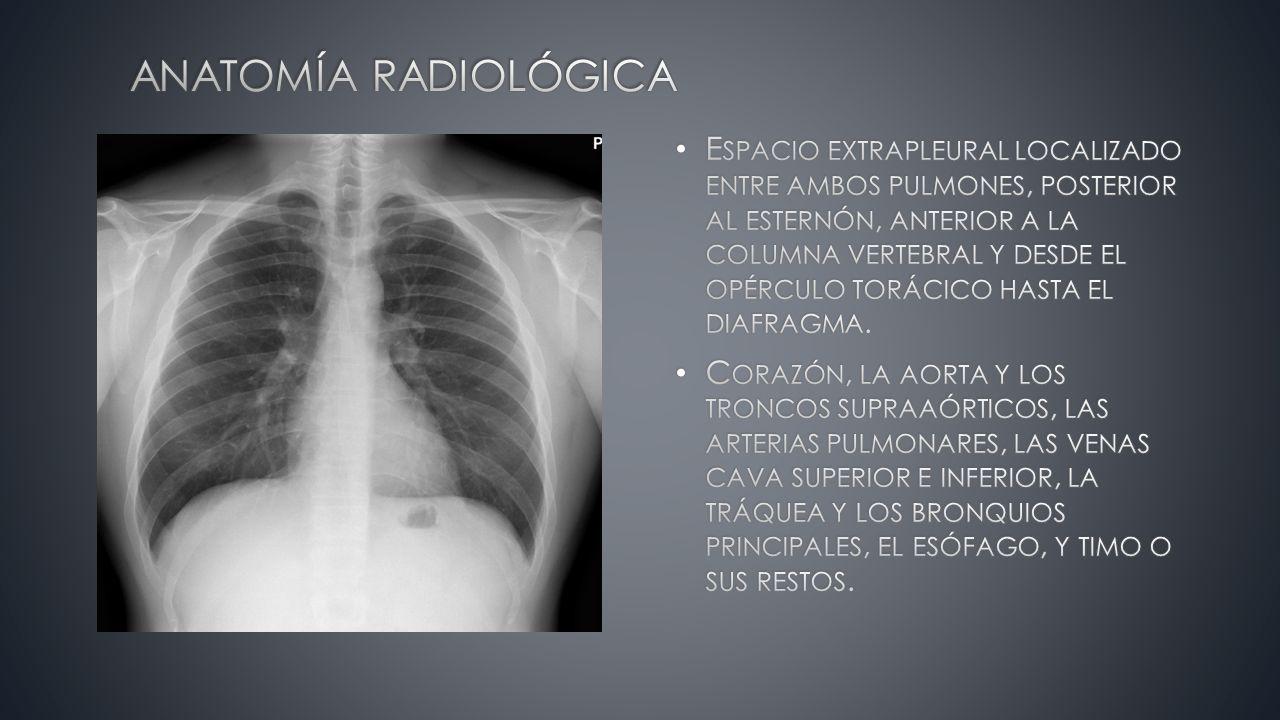 Encantador Arteria Pulmonar Anatomía Radiología Adorno - Anatomía de ...