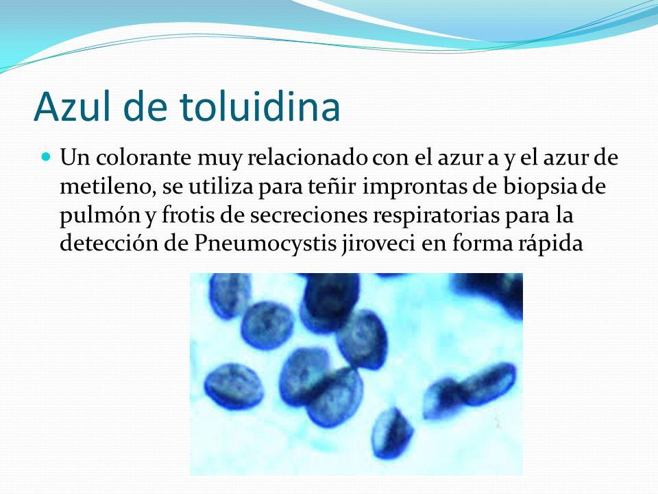 Métodos de observación de los microorganismos - ppt video online ...