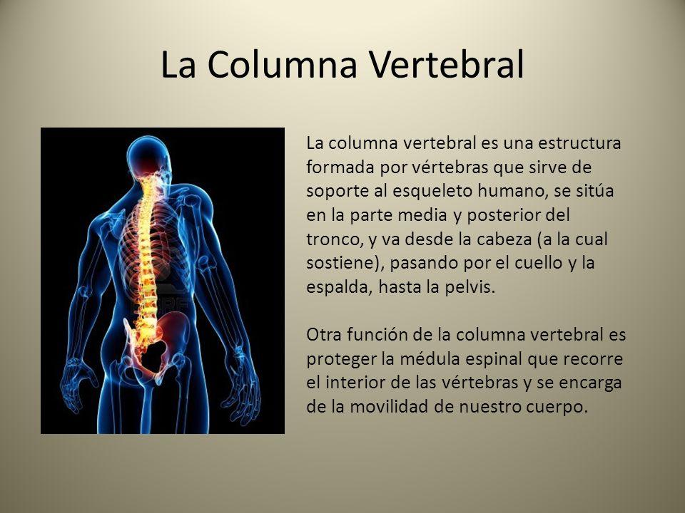 ANATOMÍA DE LA COLUMNA VERTEBRAL - ppt video online descargar