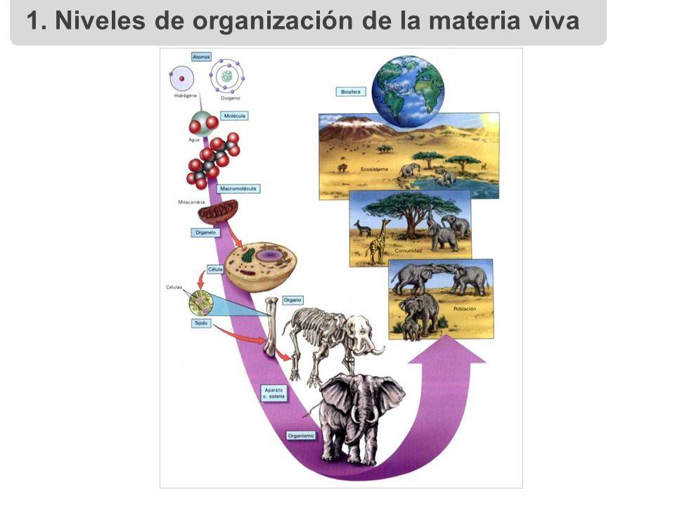 free social blueprints conceptual foundations of sociology 2004