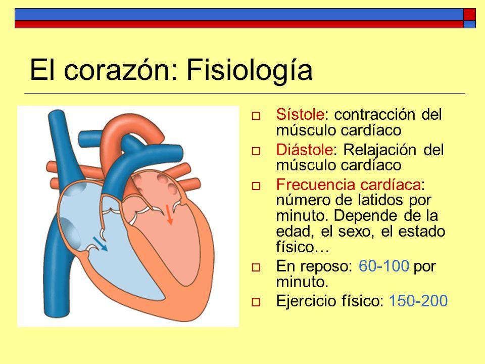 Fisiología Del Corazón 0 - Slimniyaseru