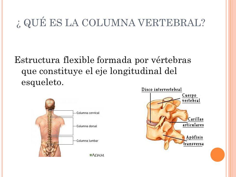 La anatomía de la columna vertebral - ppt video online descargar