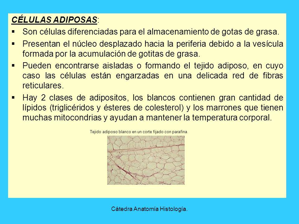 Cátedra Anatomía Histología. - ppt video online descargar